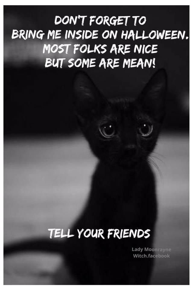 black kitten PSA